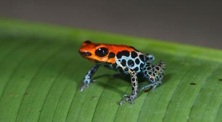 En América Latina y el Caribe, la fauna silvestre ha disminuido 94% desde 1970