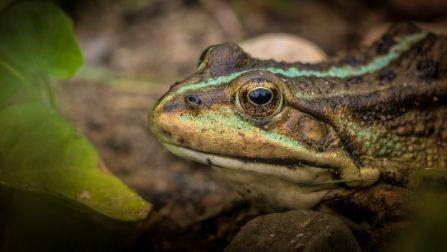 Cientificos-aseguran-que-el-cambio-climatico-envejece-a-algunos-animales