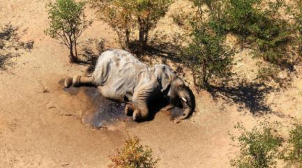 Descubren-al--culpable--de-la-muerte-de-cientos-de-elefantes-en-Botsuana