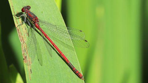 Los insectos están desapareciendo a un ritmo alarmante, alertan científicos