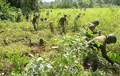 Viceministro: Este año se erradicarán 9.000 hectáreas de coca excedente en el Trópico y Yungas