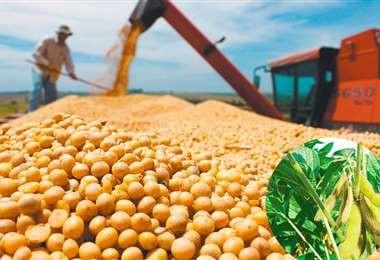 Agroexportadores-apoyan-propuesta-de-Anapo-sobre-la-banda-de-precios