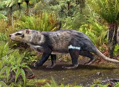 Investigadores hallaron en Chile restos de una nueva especie de mamífero de hace más de 72 millones de años
