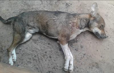 Condenado-por-matar-a-un-perro-en-Pedro-Lorenzo
