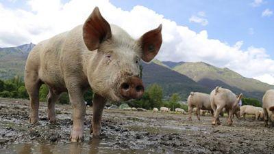 Los mamíferos pueden respirar por el ano en caso de emergencias, según estudio