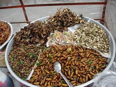 Los-humanos-del-futuro-tendran-que-comer-larvas-y-gusanos-para-evitar-la-desnutricion,-segun-cientificos