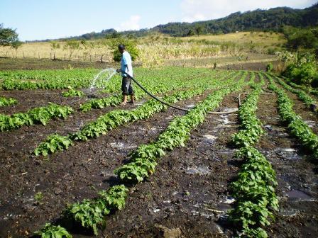 Degradaci n de los suelos avanza peligrosamente for Lo ultimo en suelos