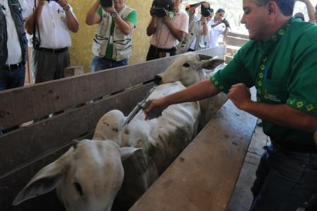 Gobernacion-vacunara-a-2.6-millones-de-cabezas-de-ganado-contra-la-fiebre-aftosa