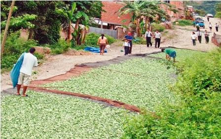 Cocaleros-de-los-Yungas-rechazan-convertir-al-Chapare-en-zona-legal-para-el-cultivo-de-coca