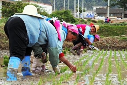 Disminuye-exportacion-agricola
