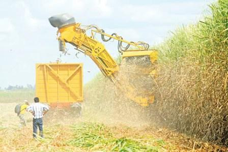 Zafra-garantizara-produccion-de-10-millones-de-quintales-de-azucar