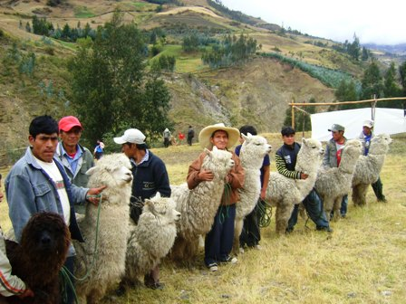 Encuentro-tripartito-entre-Bolivia,-Peru-y-Chile
