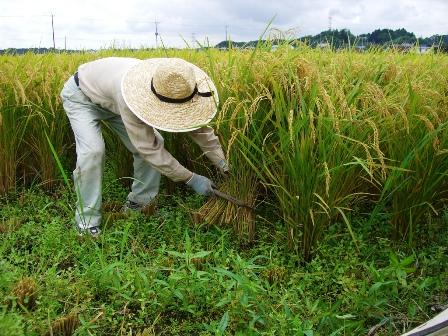 Ratifica-plan-para-ampliar-frontera-agricola-