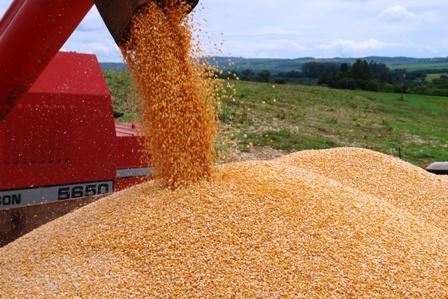 En-el-chaco-se-duplico-la-produccion--de-maiz-