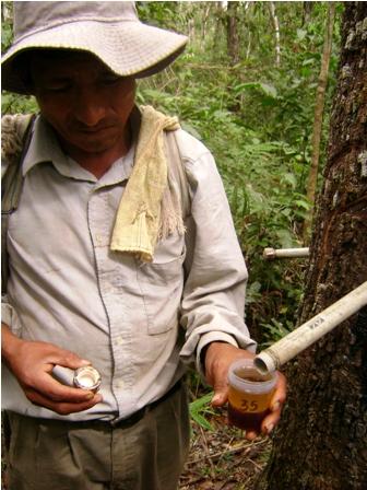 Buscan-explotar-Copaibo-de-la-reserva-mas-grande-del-mundo