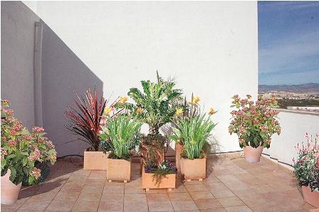 Macetas esenciales para los exteriores for Macetas decorativas para exteriores