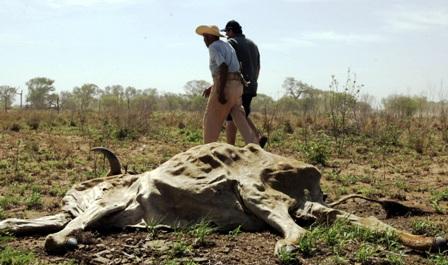 Reportan-la-muerte-de-30-cabezas-de-ganado-bovino