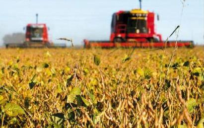 Bolivia-avanza-en-el-uso-de-semillas-transgenicas