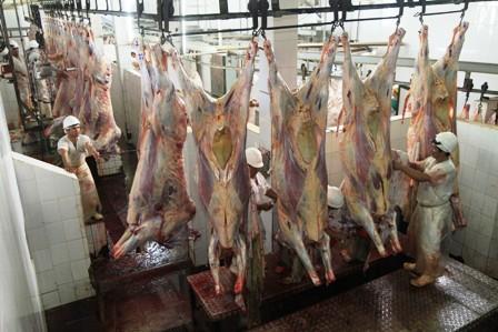 Se-cubrira-demanda-de-carne