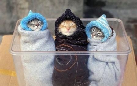 Detienen-a-un-hombre-que-tenia-tres-gatos-vivos-en-el-congelador