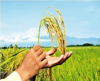 Gobierno-controlara-la-produccion-agricola