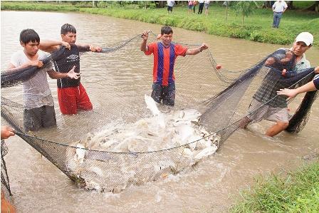 Inspeccionan criaderos de peces de el vallecito for Criadero de peces en casa