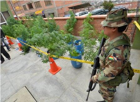 Felcn-halla-vivero-de-marihuana-en-zona-del-Cementerio-