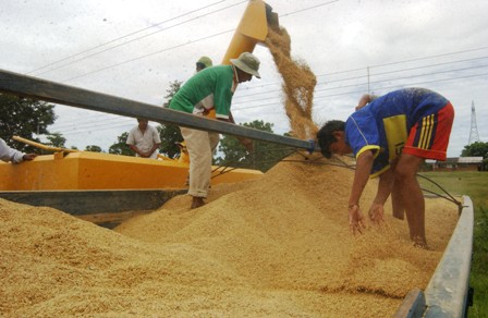 Solamente-se-ha-exportado-el-8.74%-de-arroz-de-60-mil-Tn