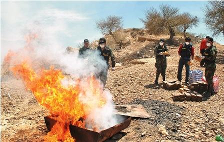 Incautan-58-kgs-de-droga-e-incineran-351-en-La-Paz