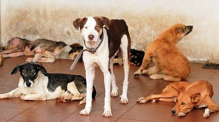 La-rabia-canina-es-un-mal-que-se-puede-prevenir