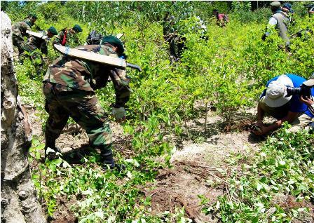 Gobierno-elimina-plantaciones-de-coca-en-medio-de-bloqueos-y-enfrentamientos