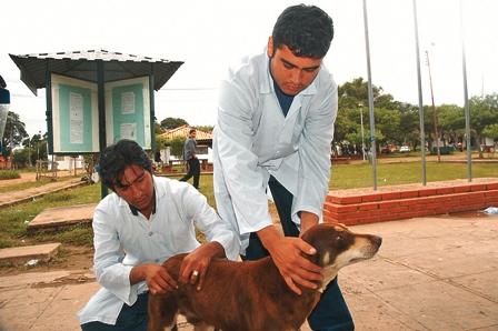 Hay-184-casos-de-rabia-canina-en-Bolivia-