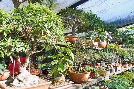 Los-bonsais-atraen-en-el-Jardin-Botanico-