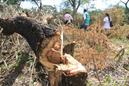 Deforestacion-devora-los-pulmones-de-Santa-Cruz