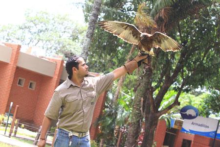 El-arte-de-domar-aves-gana-adeptos-en-Santa-Cruz