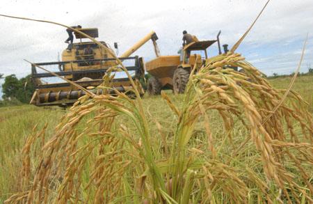 Por-baja-produccion,-ya-venden-arroz-importado
