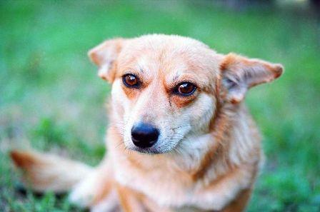 Al-menos-160-perros-aparecen-muertos-en-localidad-argentina