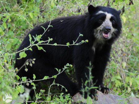 En-Bolivia-68-especies-de-animales-estan-en-peligro-de-extincion-