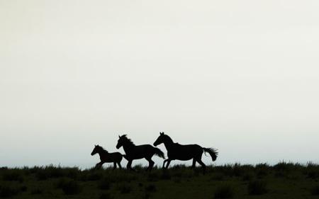 Australia-autorizo-la-matanza-de-10.000-caballos-salvajes