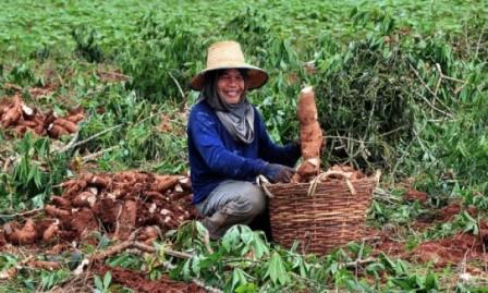 La-FAO-asegura-que-la-yuca-puede-convertirse-en-el-cultivo-del-siglo-XXI