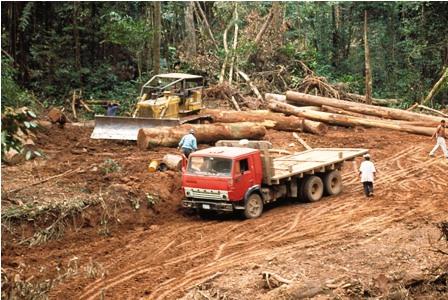 Zafra-maderera-genera-45.000-fuentes-de-empleos