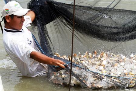 Incentivan la cr a de peces en comunidades for Cria de peces en cautiverio