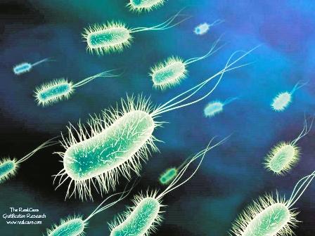 Los-ultimos-supervivientes-de-la-Tierra-seran-microbios