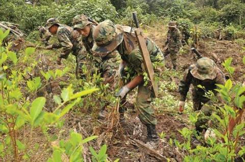 Fuerza-de-Tarea-Conjunta-erradico-hasta-la-fecha-6.610-hectareas-de-coca-ilegal-y-proyecta-superar-meta-de-2012