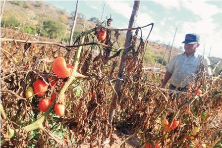 La-ayuda-no-llega-a-los-productores-de-Los-Negros