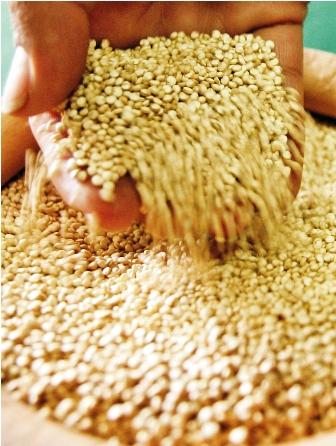 Ratifican-la-calidad-de-la-quinua-boliviana