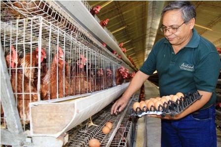 El excedente de huevos inquieta a los productores for Huevo en el ano