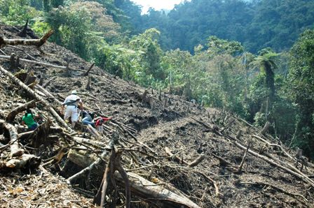 300.000-hectareas-de-bosques-deforestadas