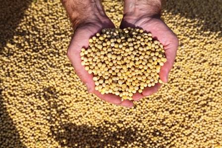 Exportaciones-agroindustriales-de-soya-y-sus-derivados-se-incrementaron-en-8,9%-