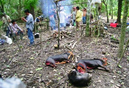 Ref. Fotografia: Avasallamientos. La reserva es netamente forestal por lo cual el asentamiento de personas es ilegal